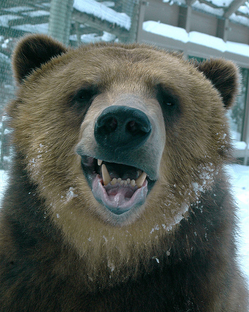 Tickling the Bear